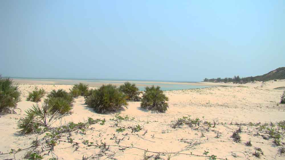rehabilitation coastal dunes east africa