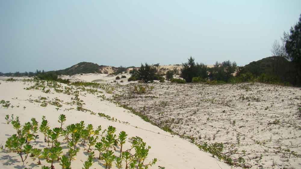 coastal dune rehabilitation east africa