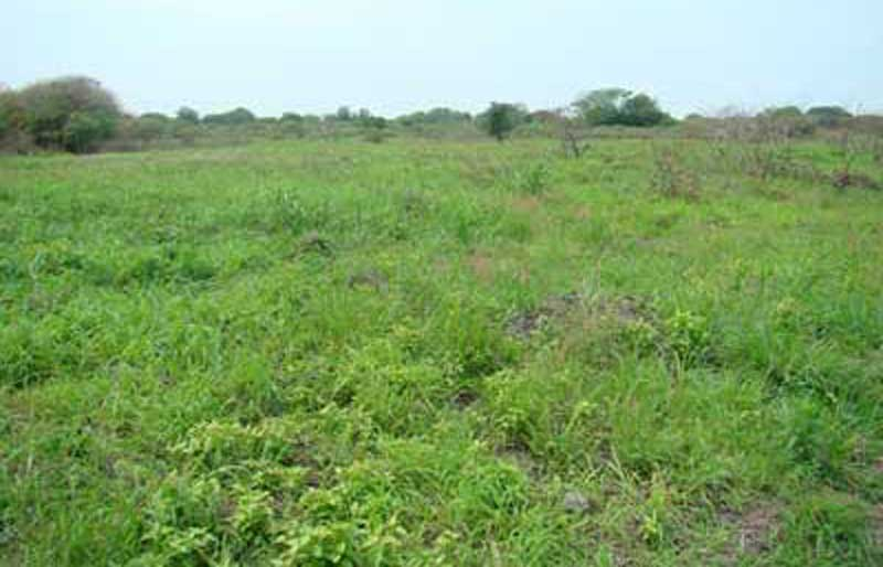 grassland restoration king shaka international airport durban
