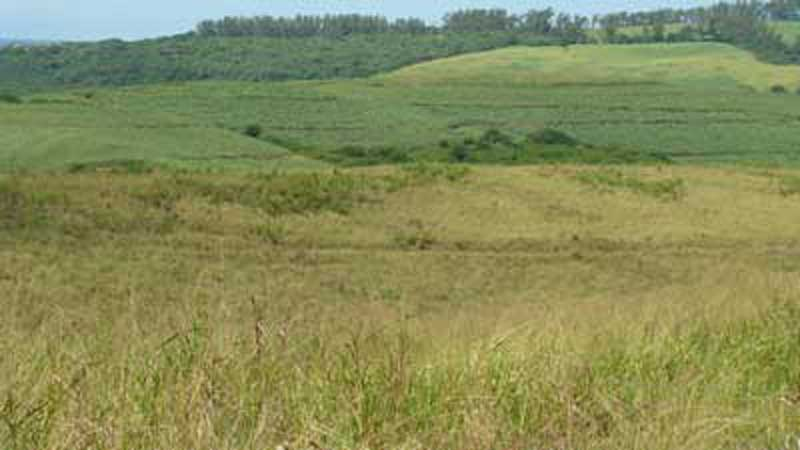 re-generating grassland king shaka international airport durban