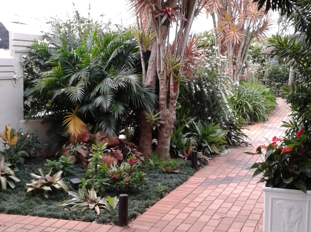 selection of exotic bromeliads exotic landscaping
