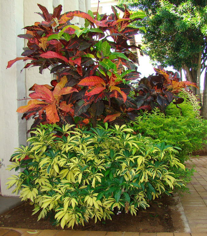 ronnie exotic landscaping croton